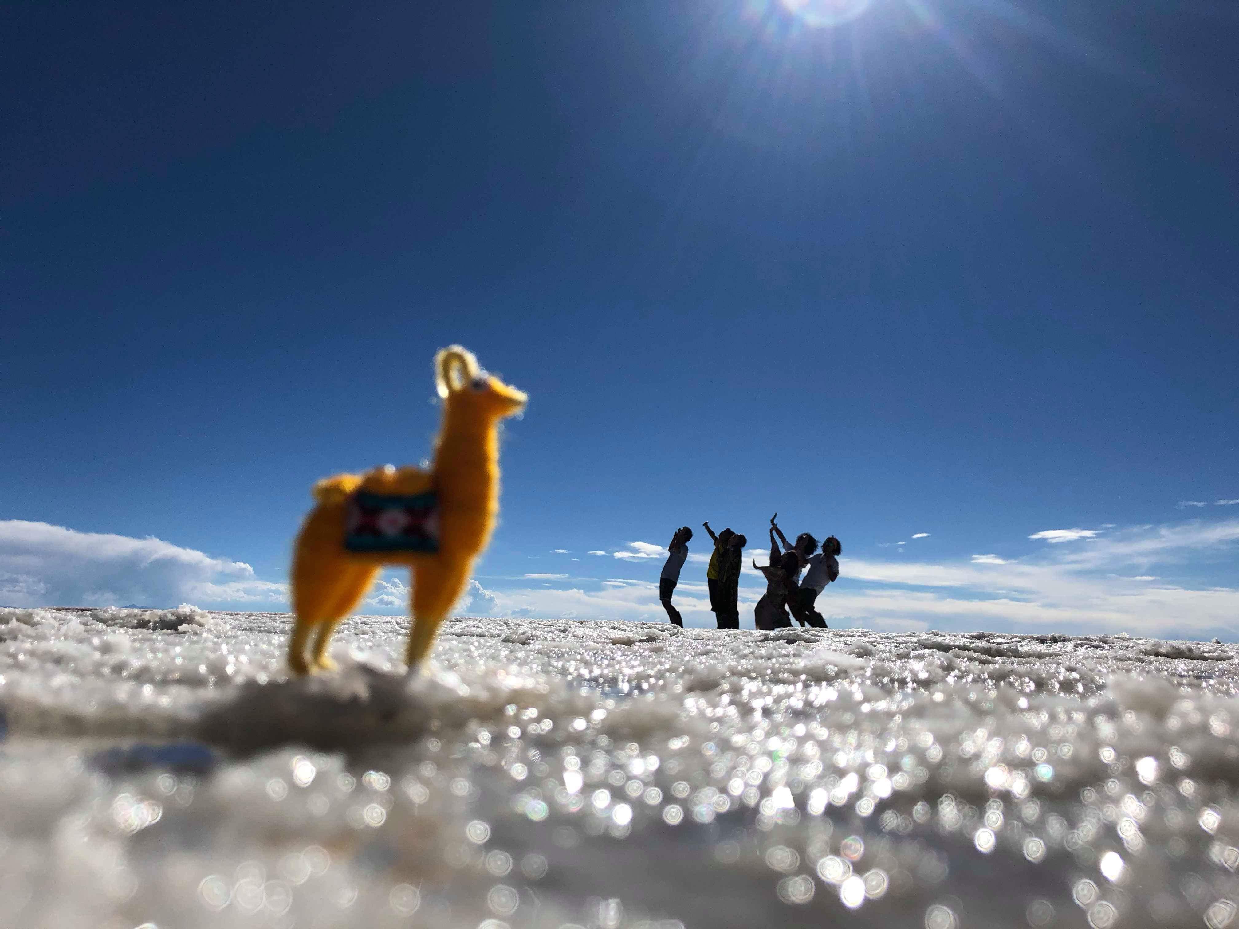 アルパカにウユニ塩湖で襲われる
